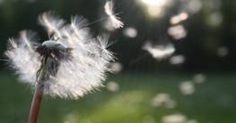 Pollenflug - Allergie-Saison